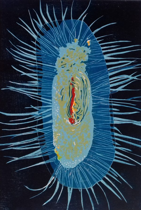 Plankton, Ocean World series