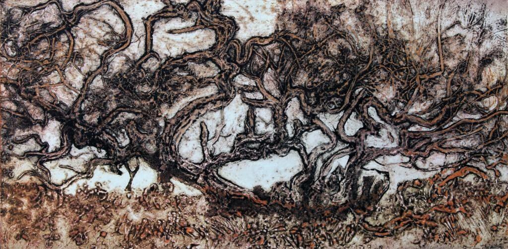 Fallen Twisted Oak