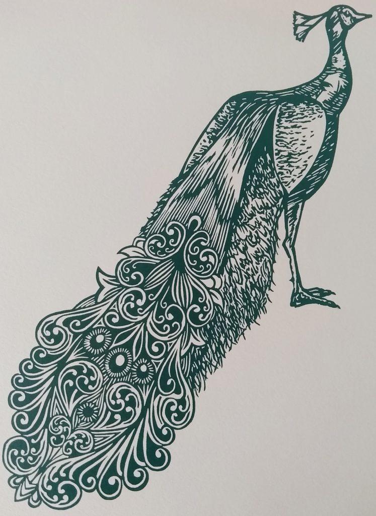 Peacock - teal